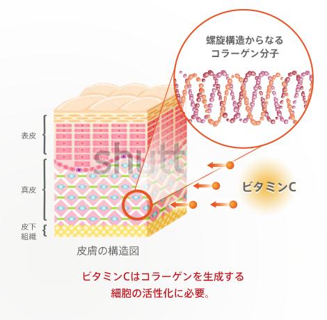 ビタミンCがコラーゲンを作る