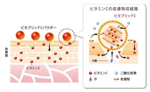 ビタブリッドCが肌に浸透する仕組み